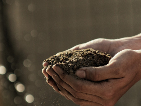Dzień Ziemi – ekologiczna postawa na co dzień