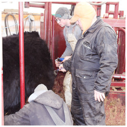CLIPPING TIME