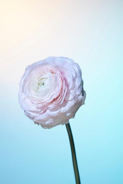 Flower Haze 1
