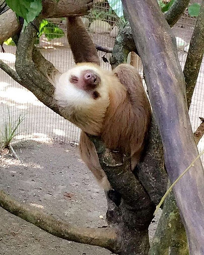 Mr. Sloth loves you today 😁Did you know