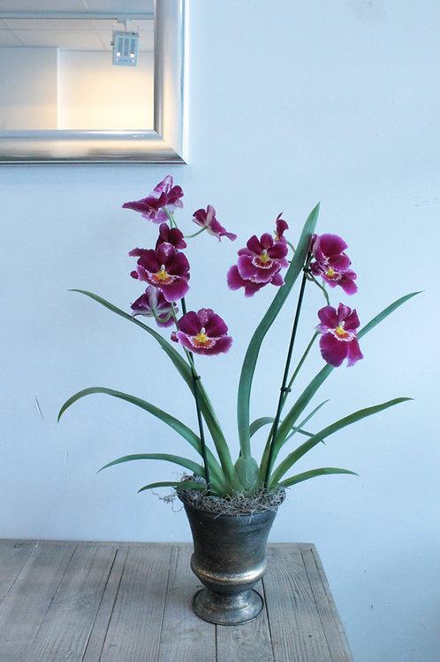spezielle Orchidee mit Übertopf,