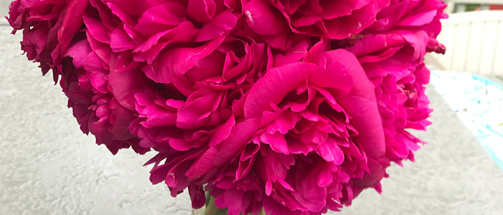 Alaska Grown Peony - Felix Supreme Cut Flower