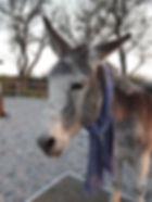 Esel mit Schal1.jpg