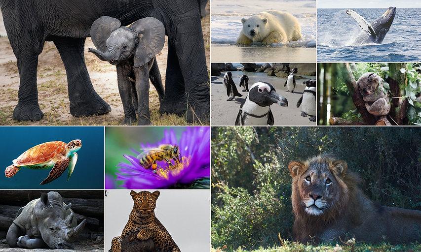 banner-animais.jpg