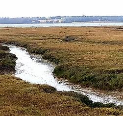 wrabness-marshland (1).webp