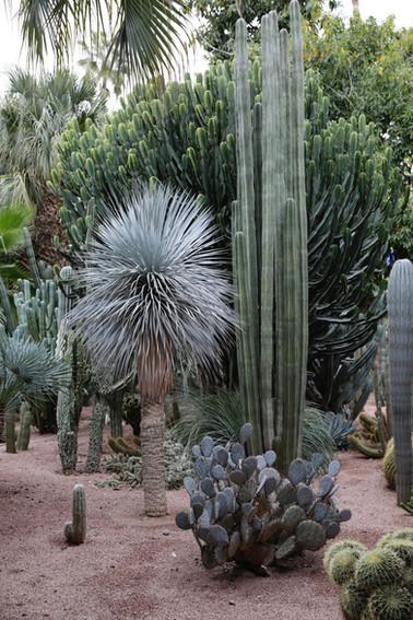 Yves Saint Laurent Gardens