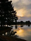 Ducks on Lake.jpg
