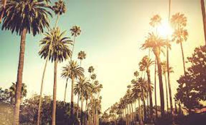 market_palmtrees.jpeg
