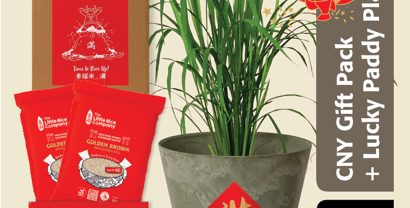 Low GI Brown Rice CNY Gift Bundle with Lucky Paddy Plant [2 x 2kg]
