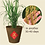 Thumbnail: Low GI Brown Rice CNY Gift Bundle with Lucky Paddy Plant [2 x 2kg]
