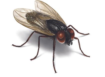 Mitzorah: We Love to Bug ~ Tzvi Abrahams