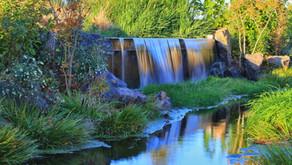 Masei: Inheriting the Watered Garden ~ Tzvi Abrahams
