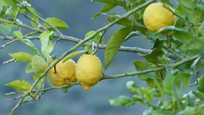 Emor: Branching Out ~ Yehoshua Steinberg