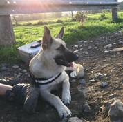 Eén van Tita haar pups, Nox