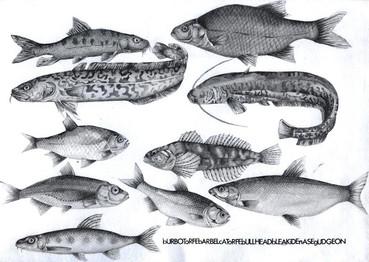 Ten Fish (for Bob Cobbing) (2010)