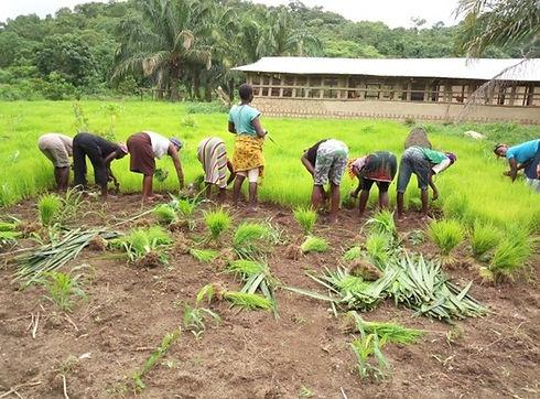 rice nursing.jpg