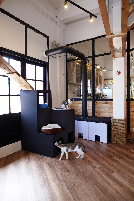 cat-cafe-011.jpg