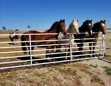 horses at attn.jpg