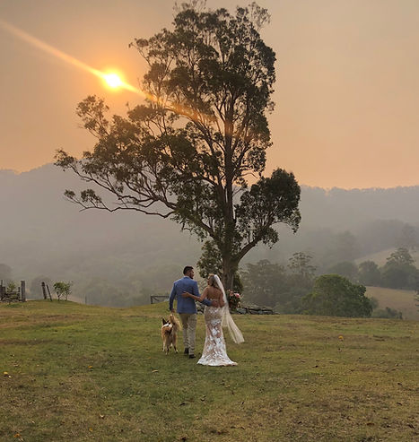 Pet wedding chauffeur Gold Coast.JPG