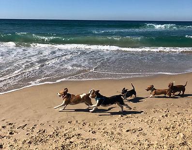 Dog Walking Gold Coast