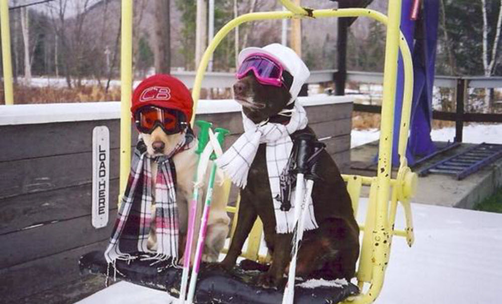 Dogs on a chair lift, Donner Bliss