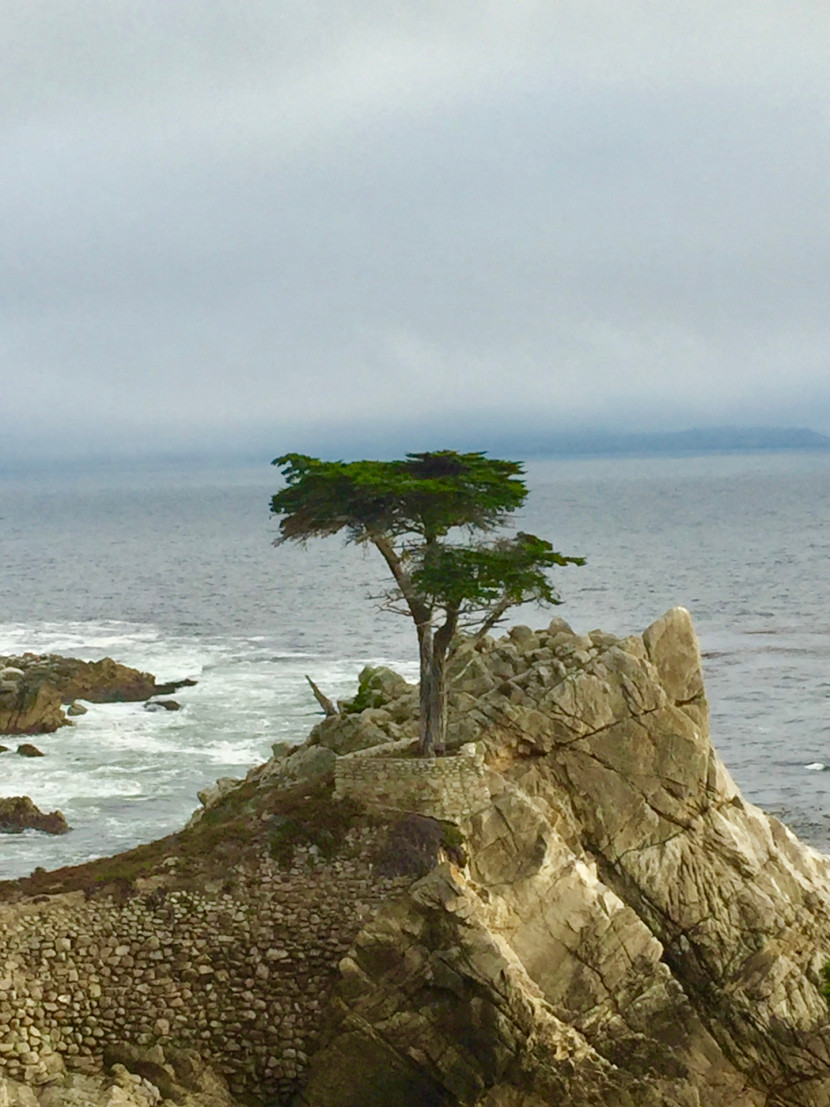 Alex's view of the Lone Cypress on 17 Mile Drive