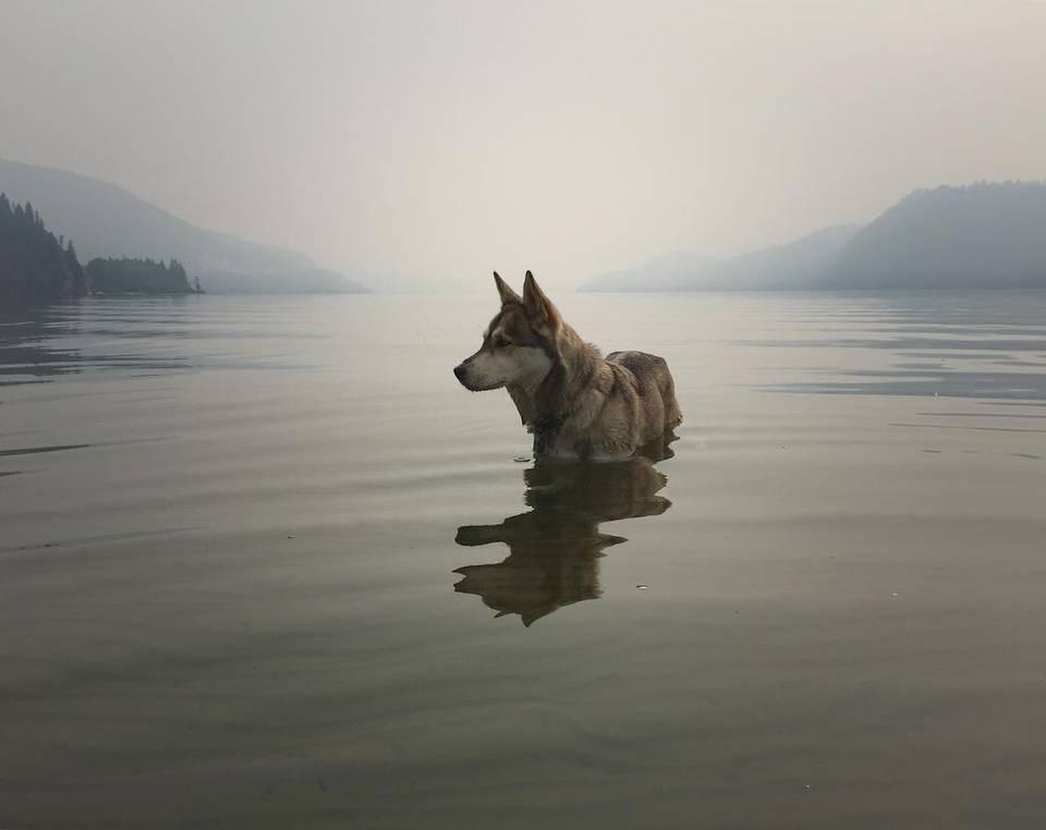 Dog in alpine lake, Donner Bliss