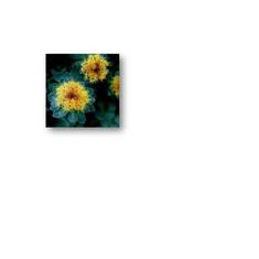 Rhodiola.jpg
