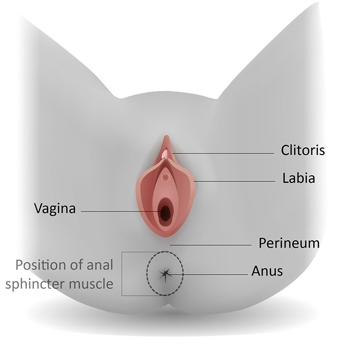 Anatomia do períneo