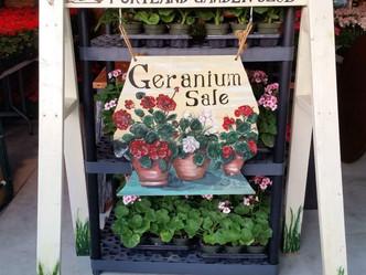 Portland Garden Club 2018 Annual Geranium Sale Scheduled for May 12