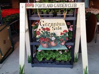 Portland Garden Club Geranium Sale