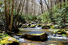Boone Fly Fishing Streams