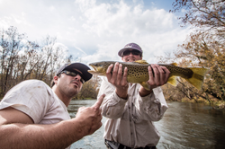 """Nice 21"""" Brown Trout on the Holston"""