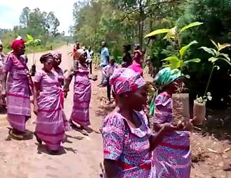 Distributing fruit tree seedlings