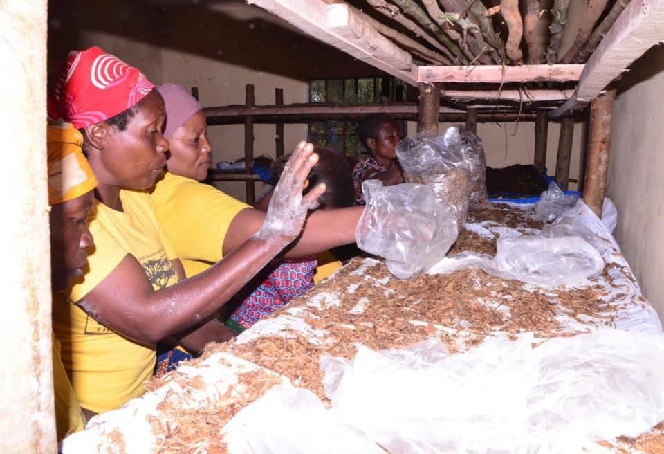 Preparing the growing bags