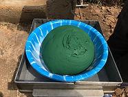 Spirulina harvest at POPOF spirulina centre