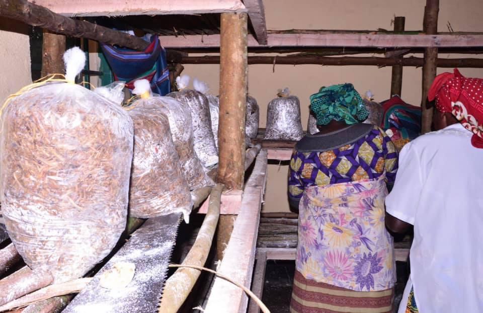 Mushroom growing bags - all we need now is patience!