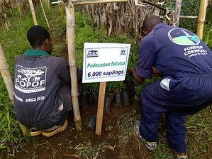 Taking care of the tree seedlings