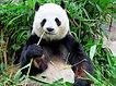 Thérèse panda.jpeg