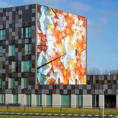 הוסטל במחלקה הסיעודית באוניברסיטה בהולנד