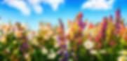 Les fleuries