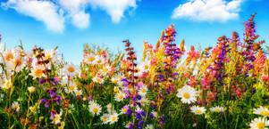 focus-fleurs-bach.jpg