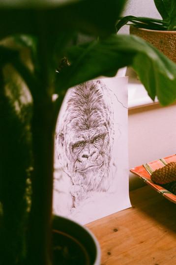 #14 | Gorilla