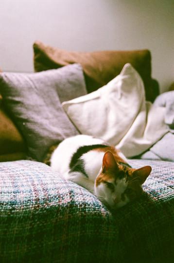 #8 | Sofa