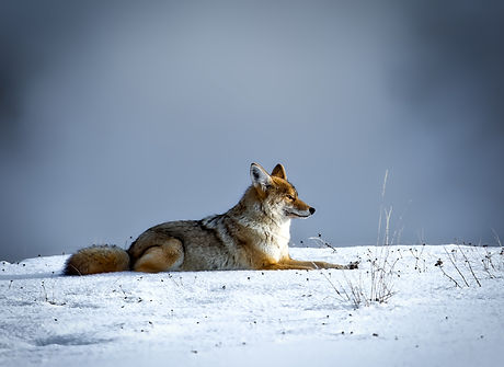 animal-canine-cold-206828.jpg