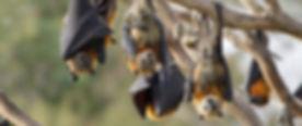 bats-cv-1500x632.jpg.jpeg