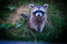 adorable-animal-baby-634255.jpg