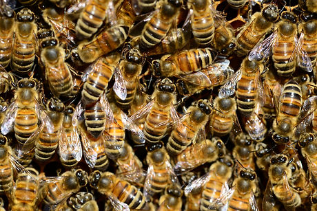 animal-photography-animals-beehive-59829.jpg