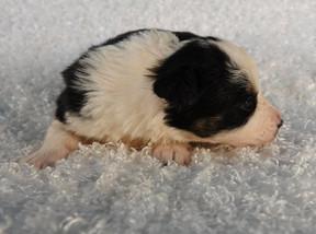 Puppy 14.jpg