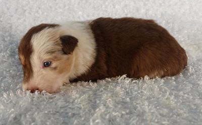 Puppy 13.jpg